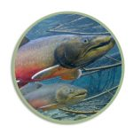 Icon for Bull Trout Upcoming HLI webpage