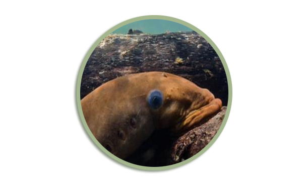 Icon for Other Fish Upcoming HLIs webpage