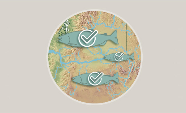 Icon for Fish Monitoring Data tool