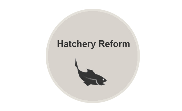 Logo for About Hatchery Reform webpage