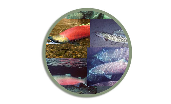 Logo for the Fish Species webpage